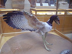 250pxarchaeopteryx_lithographica_2